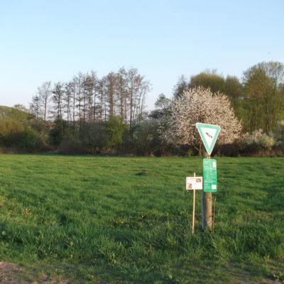 Anpflanzungen in NSG