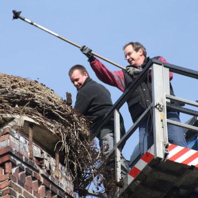 Das mittlerweile 70cm hohe Nest wird teilweise abgetragen