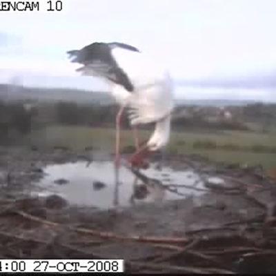 Wasserpfütze im Nest