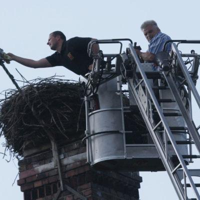 Die Feuerwehr reinigt die Kamera, Udo Seum beringt die Jungstörche