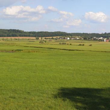 NSG Im Rußland und Kuhweide bei Lindheim
