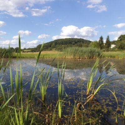 Schonende Pflege der Uferbereiche durch Balkenmäher